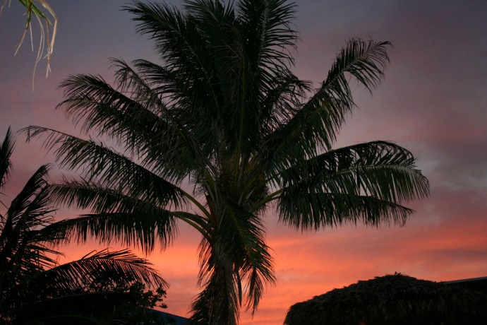Belize sunset behind palms