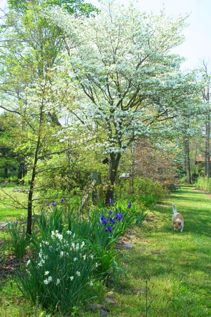 Lou, dogwood vert