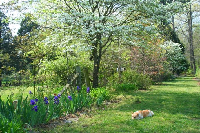 Lou,iris & dogwood, hor