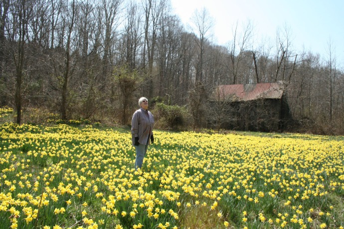 mom in daffodils looking up