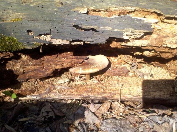 mushroom hiding