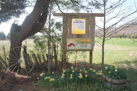 TN Century farm sign, daffodils