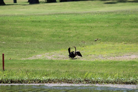 Daufuskie bird