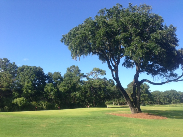 Daufuskie Bloody Point golf, big tree