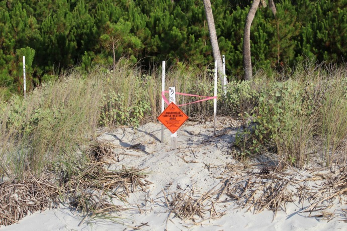Daufuskie loggerhead nest sign