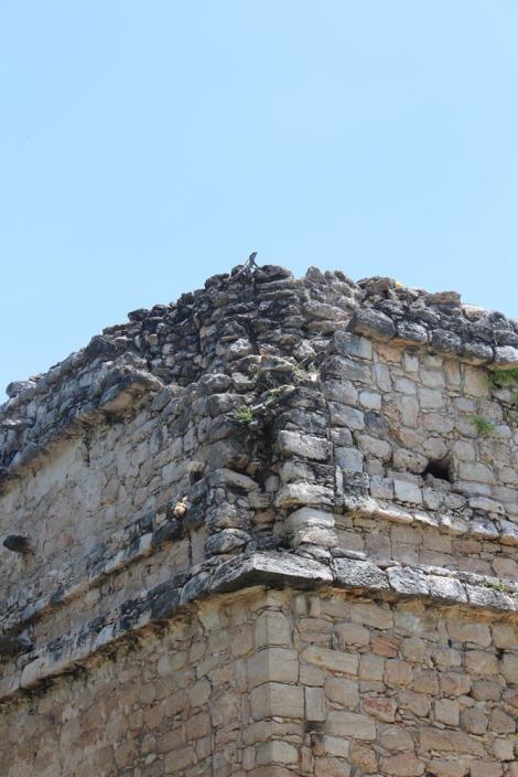 Ek Balam iguana on top