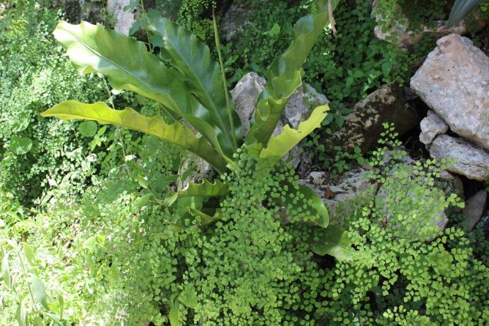 Ek Balam orchid and fern