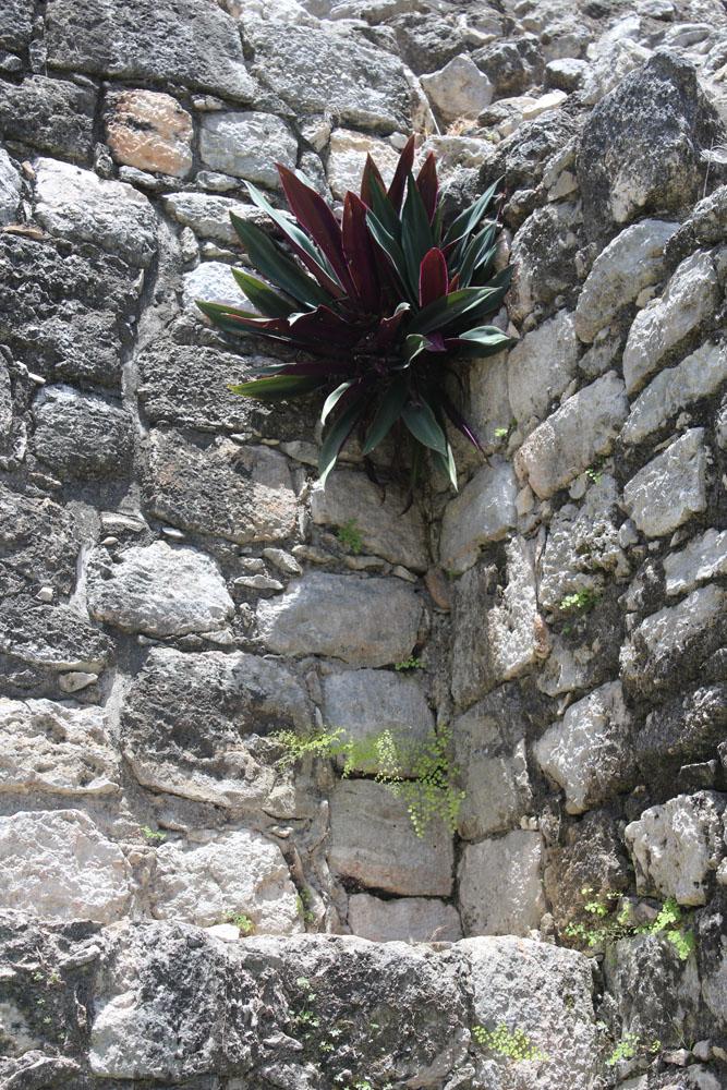 Ek Balam purple plant on stone