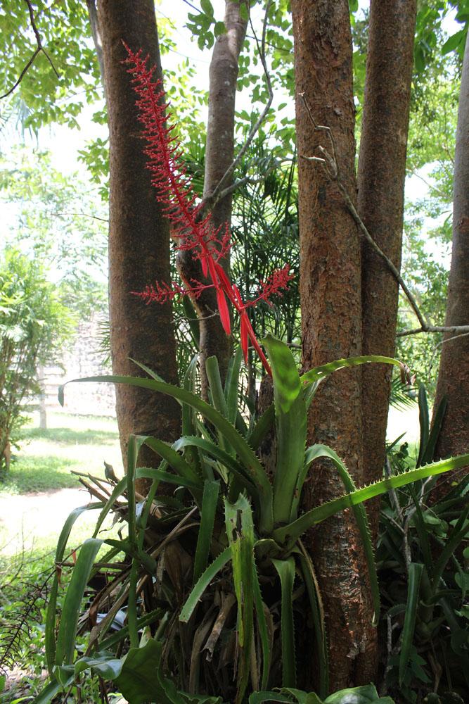 Ek Balam red spiky flower