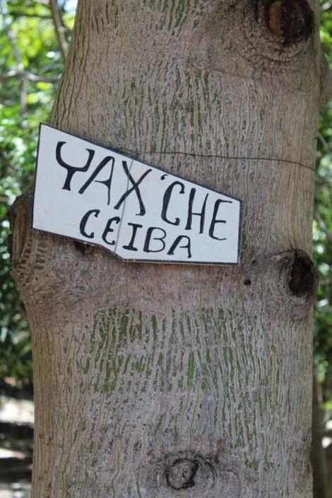 Ek Balam Yax'che tree