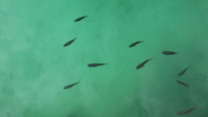 Sian Ka'an fish in water