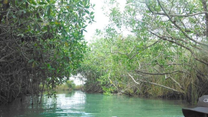 Sian Ka'an rio mangrove view