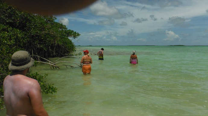 Sian Ka'an us walking in mangrove