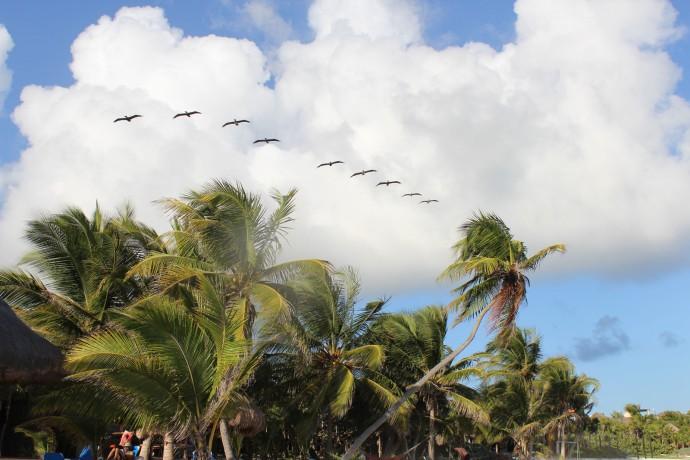 Soliman Bay pelican patrol, clouds