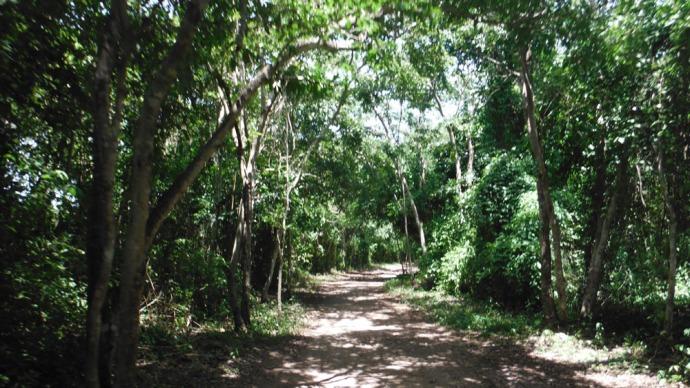 Xcanche cenote bike path