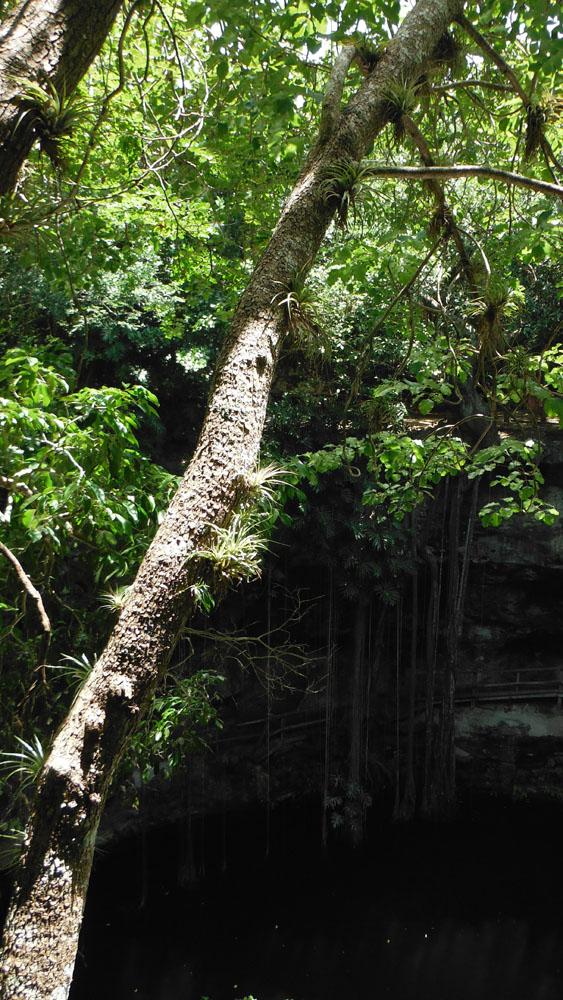 Xcanche cenote orchid tree
