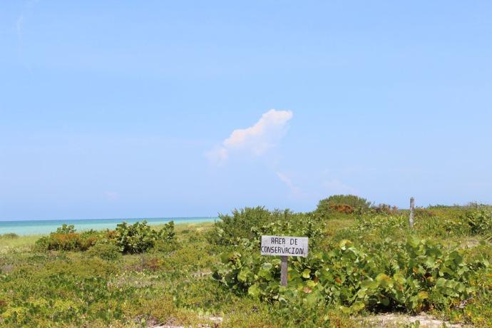 Rio Lagartos beach conservation sign