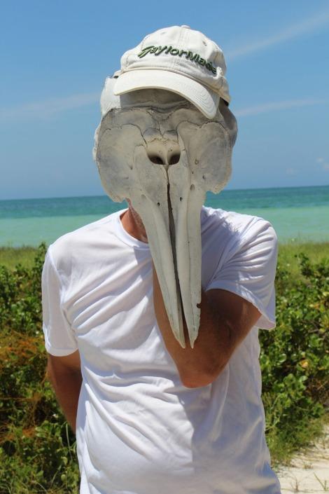 Rio Lagartos beach Wally dolphinhead