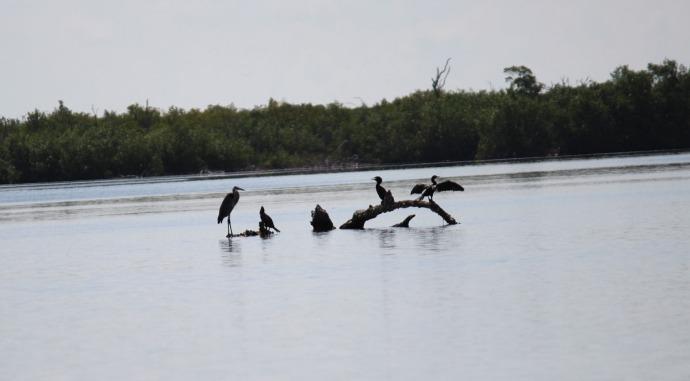 Rio Lagartos birds silhouetted in river