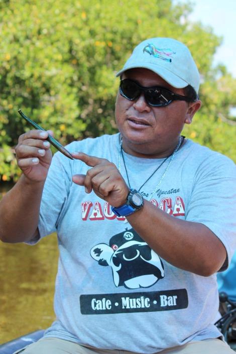 Rio Lagartos boat captain mangrove seed