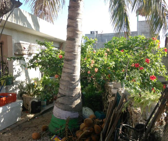 Rio Lagartos cardinal courtyard