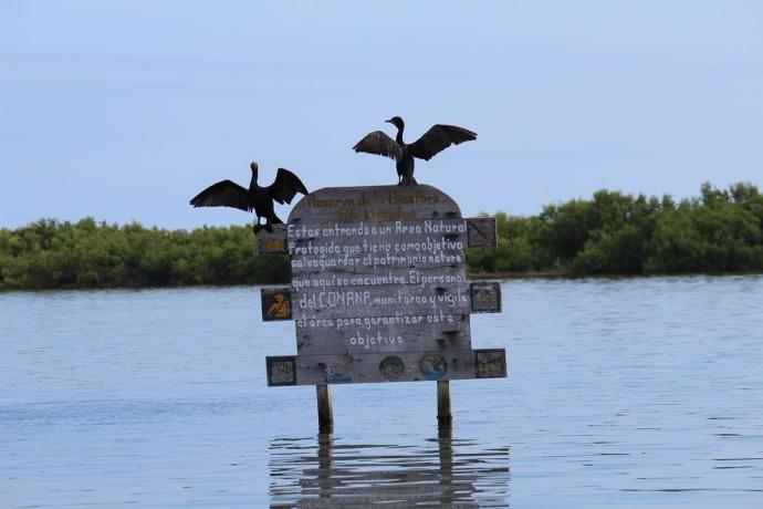 Rio Lagartos cormorants on sign