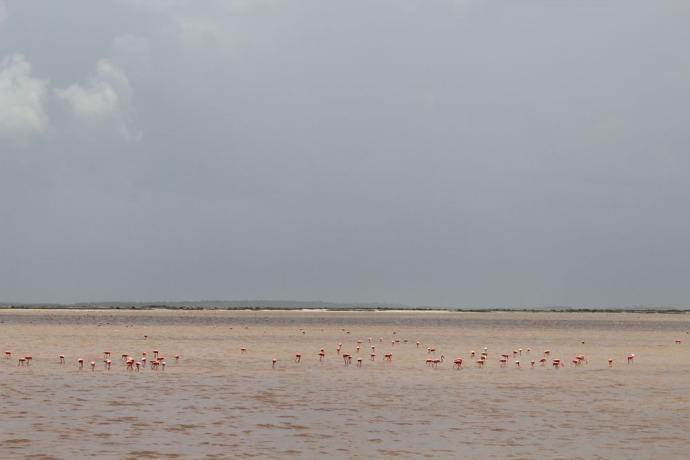 Rio Lagartos flamingoes forever