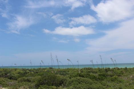 Rio Lagartos yucca bank to ocean, saltworks