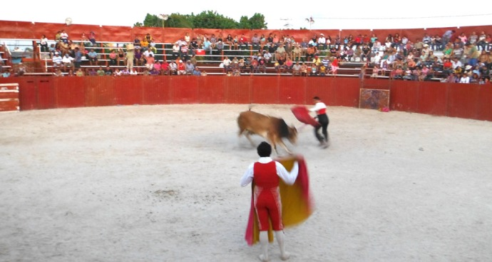 San Felipe bullfight bull charging