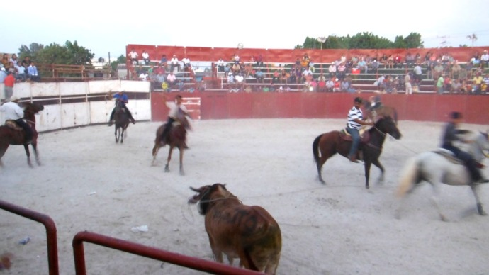 San Felipe bullfight, bull & cowboys