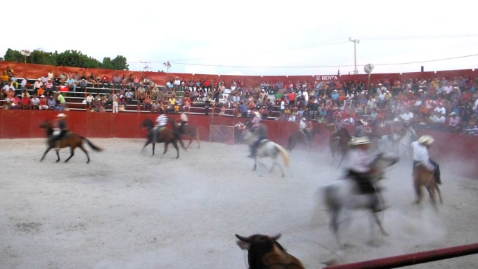 San Felipe bullfight, cowboys all running