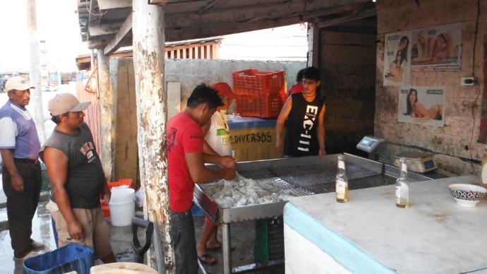 San Felipe fishermen in line