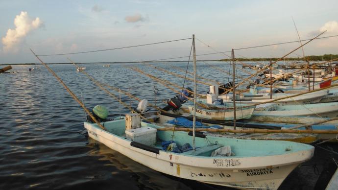 San Felipe octopus boats