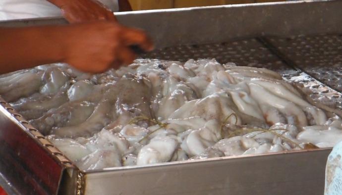 San Felipe octopus pile