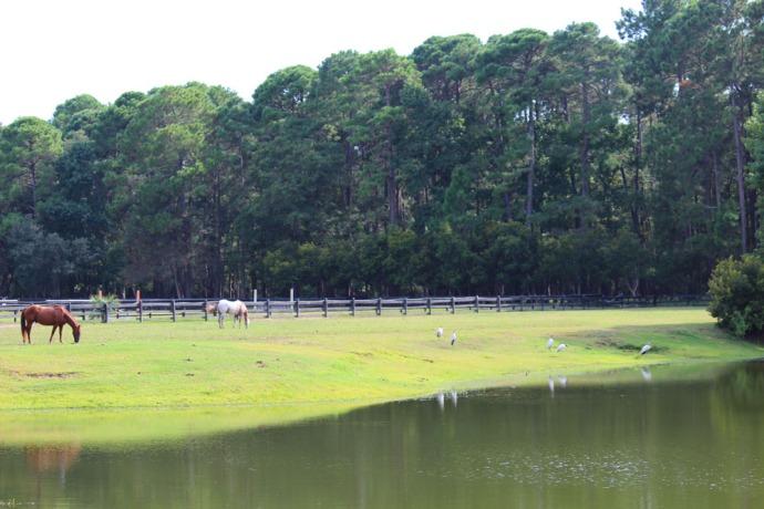 Daufuskie horses & storks