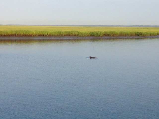Dolphin, Cooper River