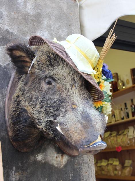 Orvieto boar with hat