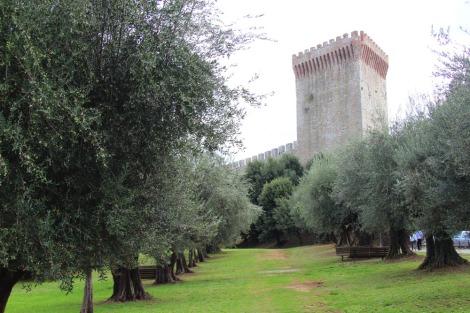 Castiglione del Lago ancient olives, fortress