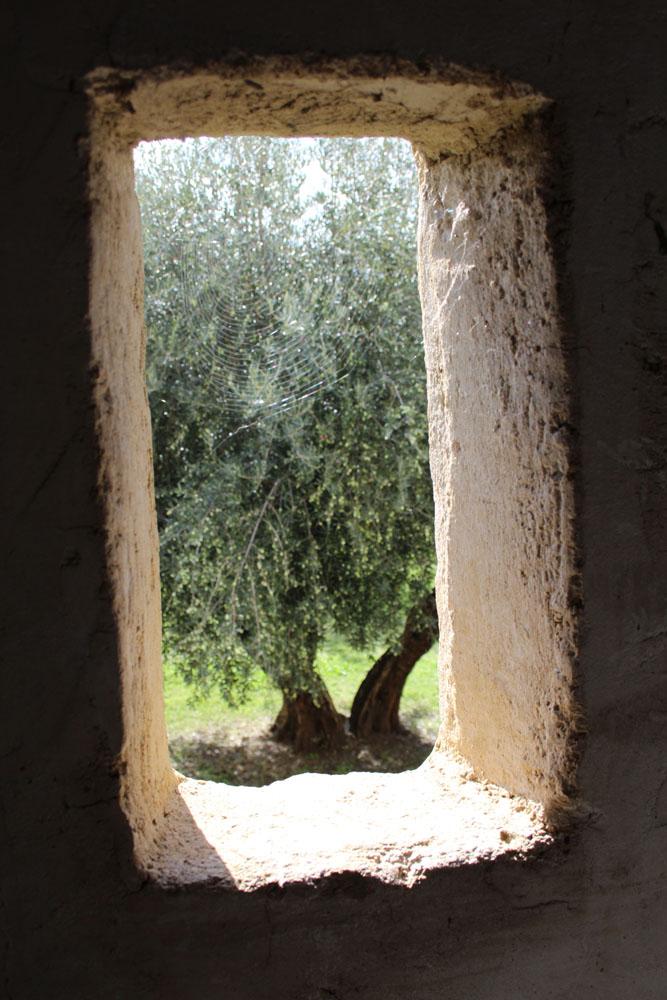 Castiglione del Lago fortess walk opening to olive