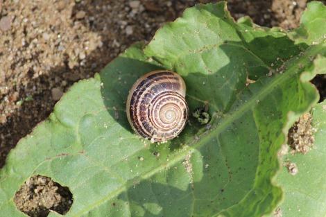 La Mucchia Casa Vacanze snail in garden