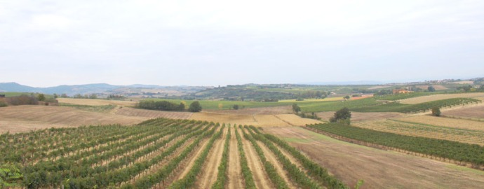 Tuscany vineyard view