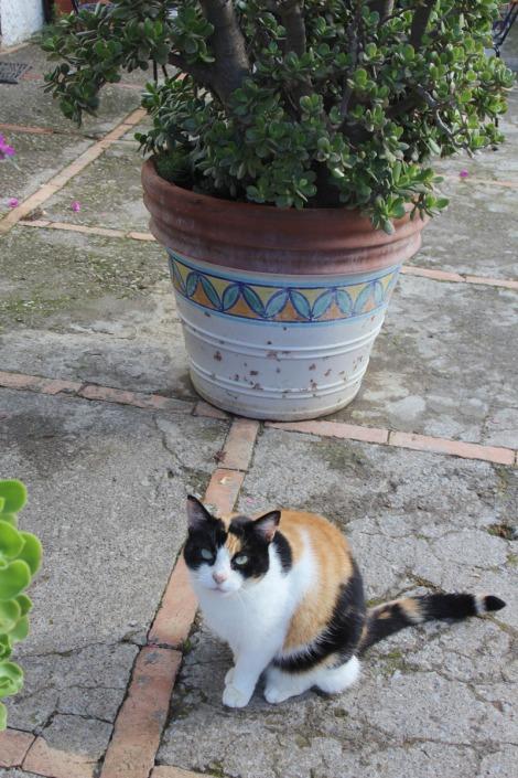 Erca kitty & flower pot