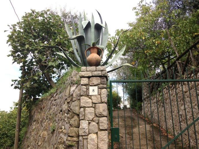 Massa agave and urn