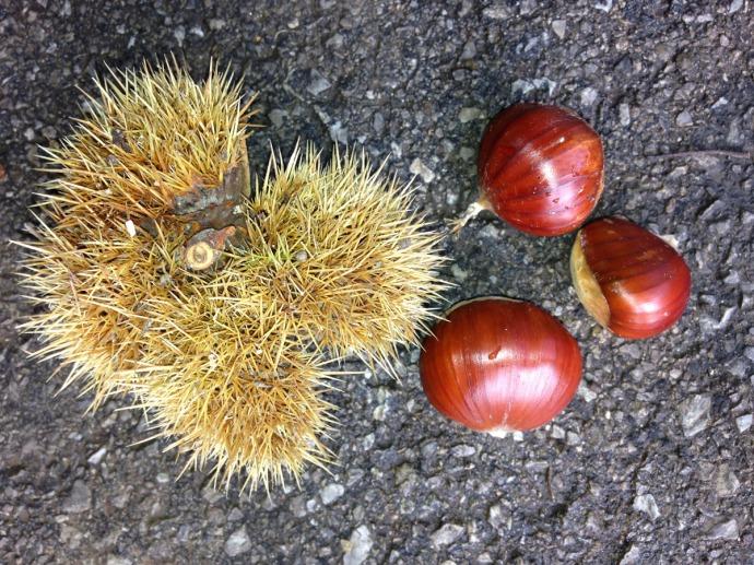 Massa chestnuts