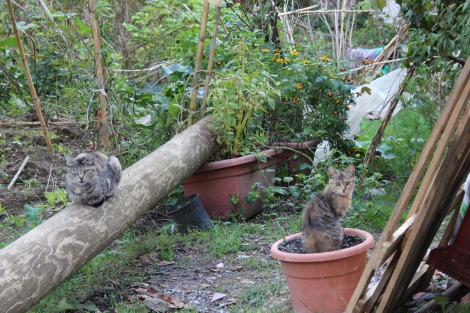 Massa feral cats in garden