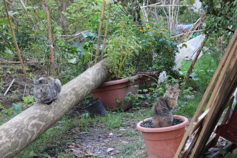 Massa feral cats in garden