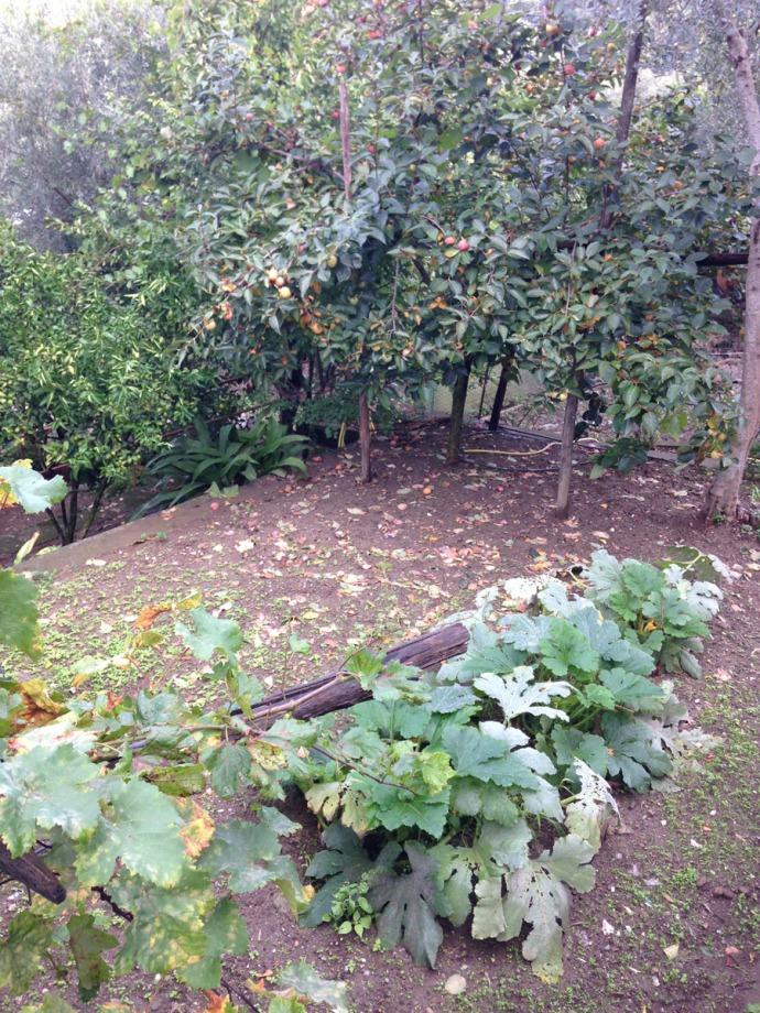 Massa garden