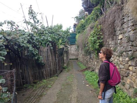 Massa Lucia and kiwi arbors