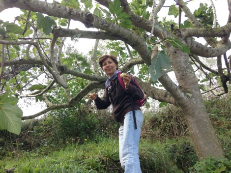 Massa Lucia collecting figs
