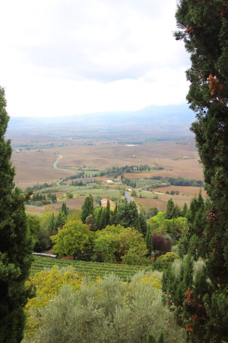 Pienza vert vineyard to valley view